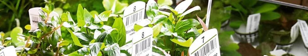 Markowe rośliny Tropica